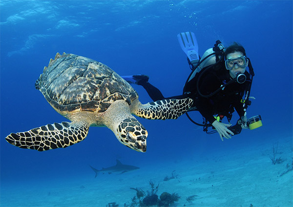 Morning 2-Tank Dive Trip